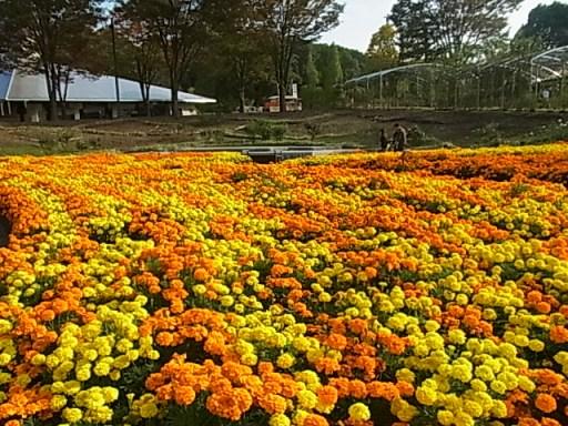 花フェスタ記念公園08