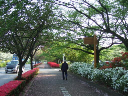 市役所前の歩道