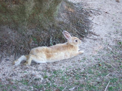 ウサギ02