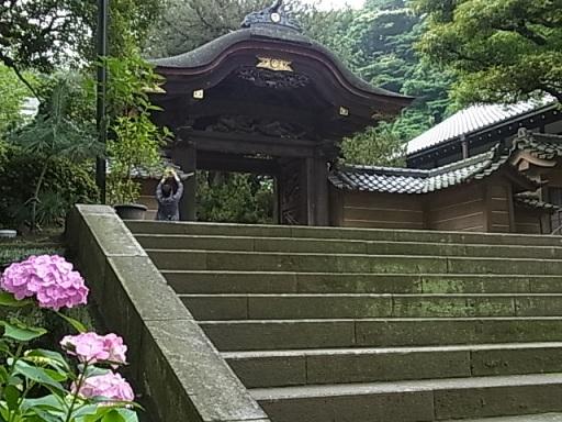 円覚寺唐門01