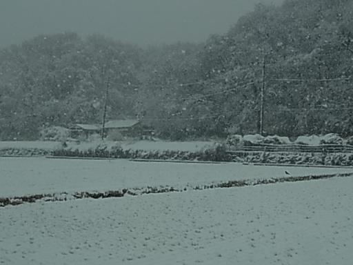 寺家ふるさと村(雪)03