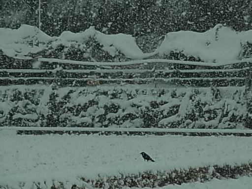寺家ふるさと村(雪)04