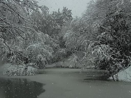 むじな池(雪)