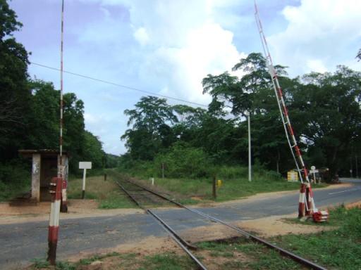 Palugaswewa02
